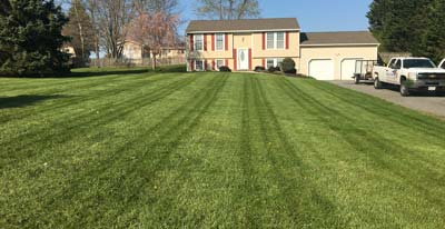 westminster lawn care company