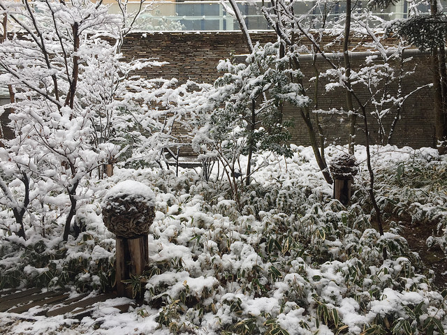 Lawn and Garden Activities for Winter