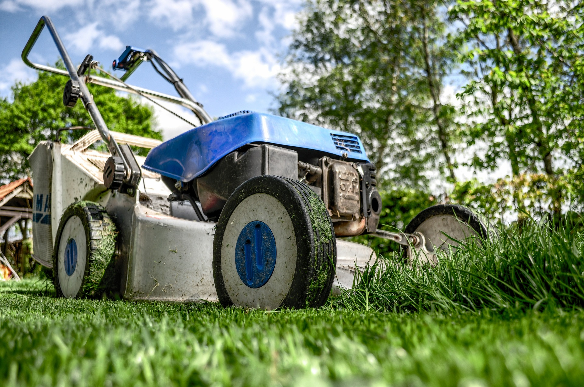 Before you Renew your Lawn Maintenance Contract