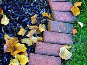 5 Common Mulching Myths Debunked